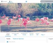 followers twitter