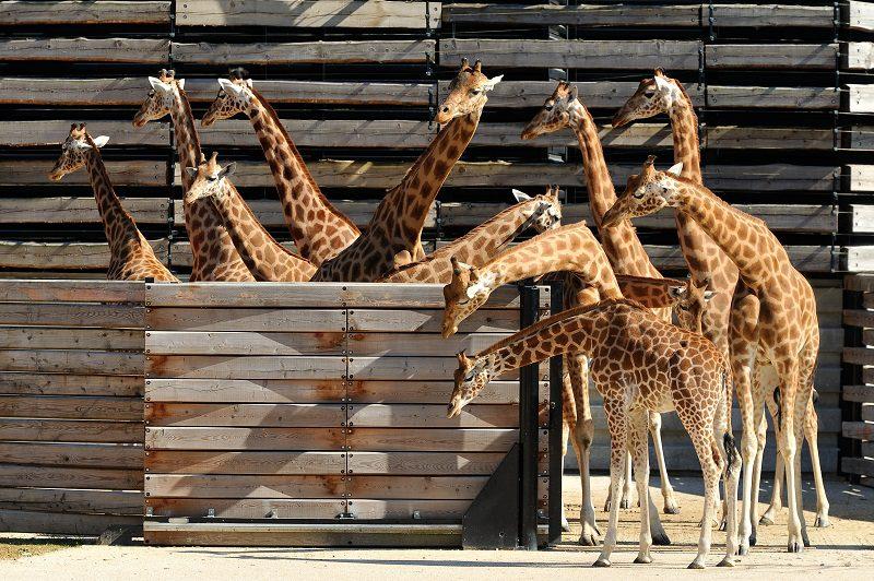 parc zoologique vincennes
