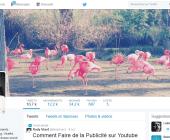 profil twitter
